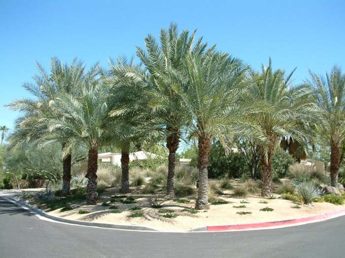 Who are you looking for in Palm Desert